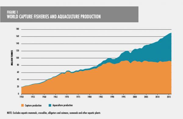 Næringsfiske og produksjon av fisk